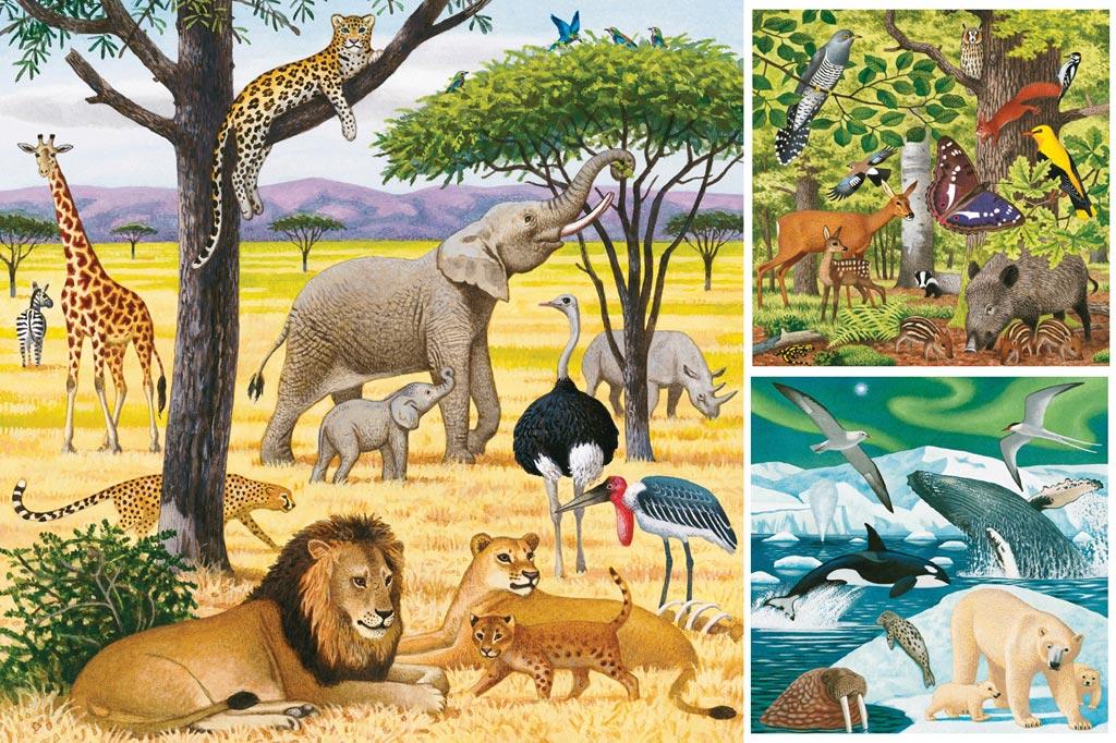 сюжетная картинка животные жарких стран